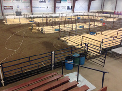 Pens set up for Bull sales