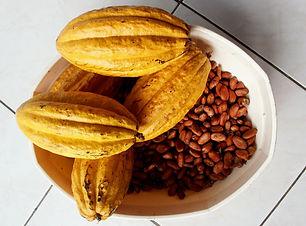 Theobroma_cacao free to use.jpg