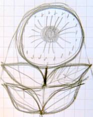 SKANDI FLOWER - drawing