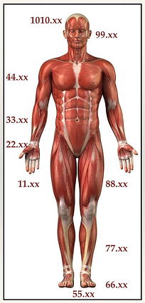Acupuncture point specificity.png