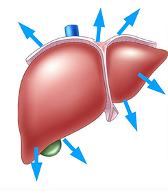 liver qi stagantion, Tungs points, liver yang points
