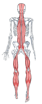 SBL Final Red Tung Fascia Course.png