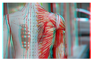 Fascia and Meridians.png