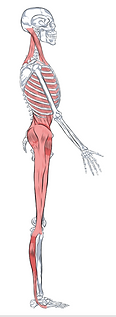 LL Final Red Tung & Fascia Lines.png