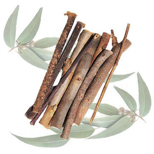 Bâtonnets et brindilles d'eucalyptus