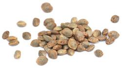Seeds of Hemp