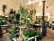 Welcome Bio Bazar (Paris)