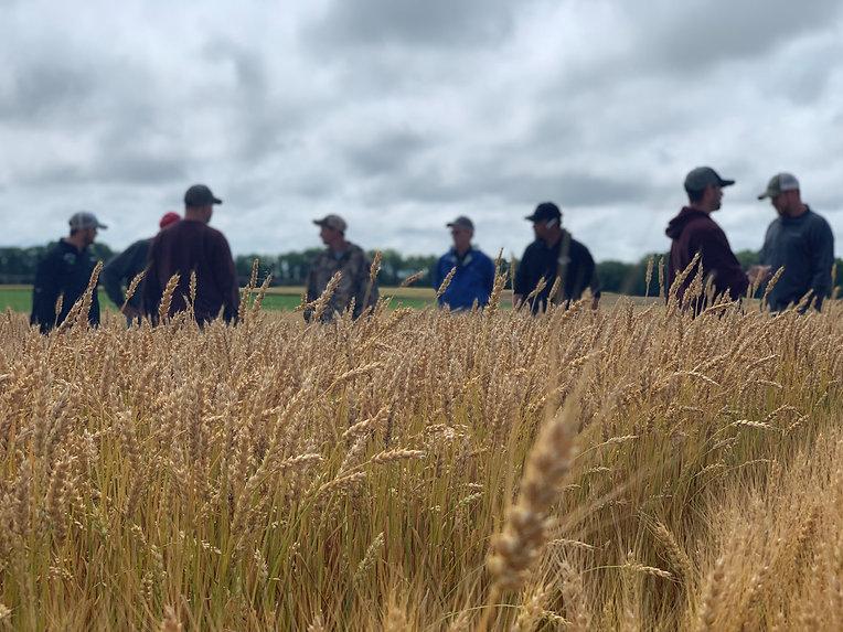 wheat field day 1.jpg