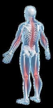 William Muir MD Spine Treatment