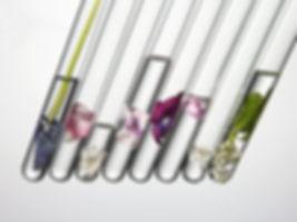 gi-flowers-in-test-tubes-56afba835f9b58b