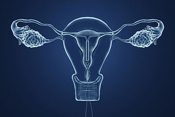 reproductive%20system_edited.jpg