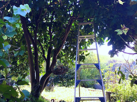 How an Orange Tree Can Make Your Day Just Lovely