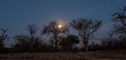 Moonscape Kruger