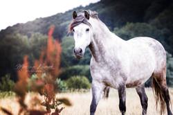 Pferde (5)