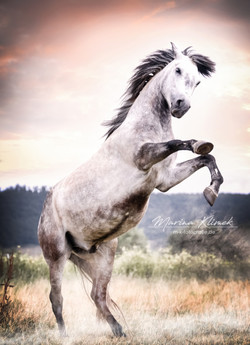 Pferde (1)
