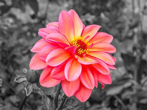 Ireland Flower
