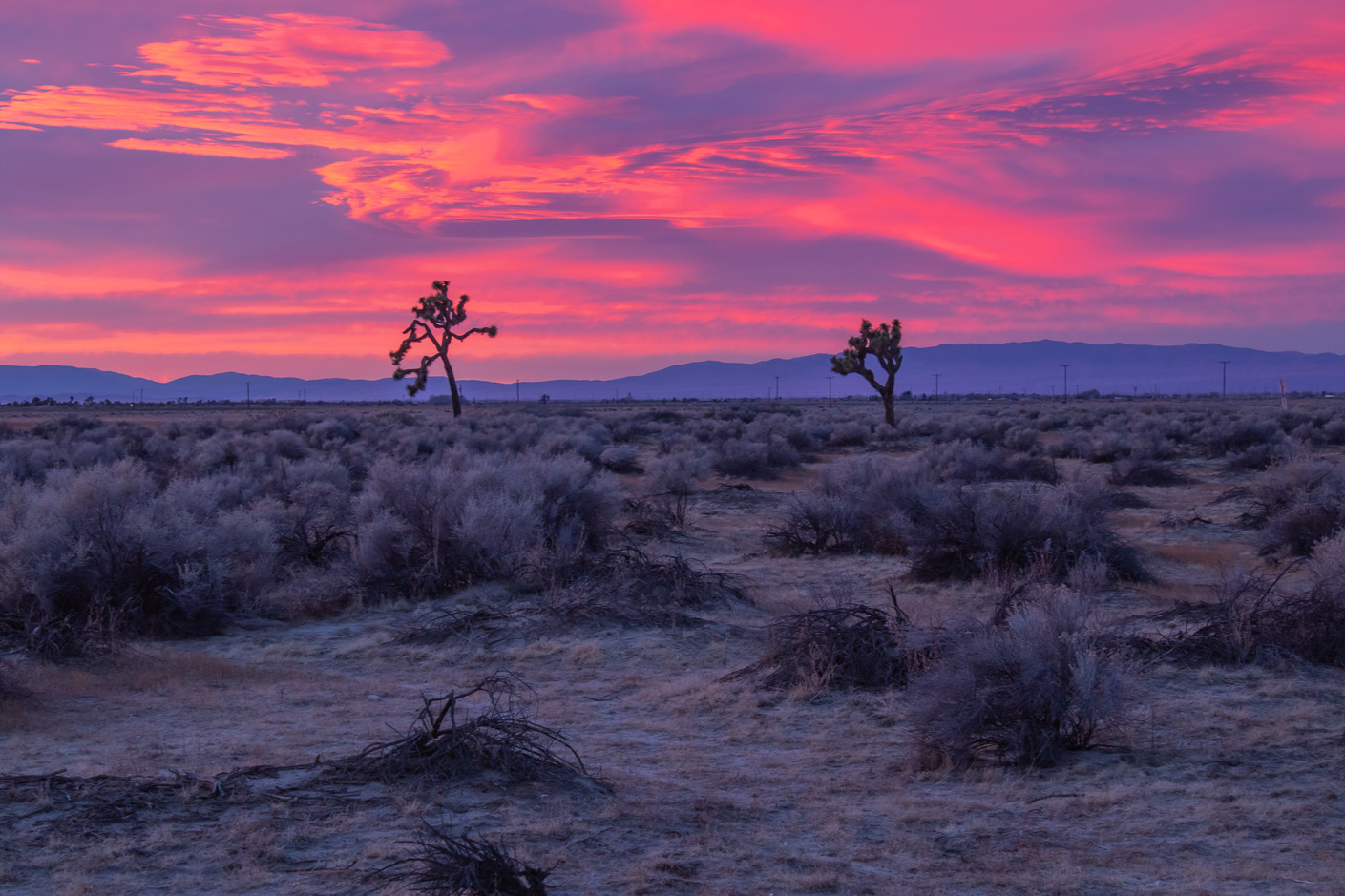 Antelope Valley Joshua Trees Sunset