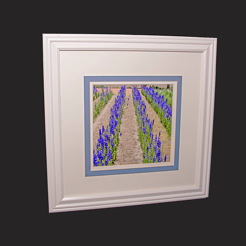 Texas Bluebells 8x10 framed print