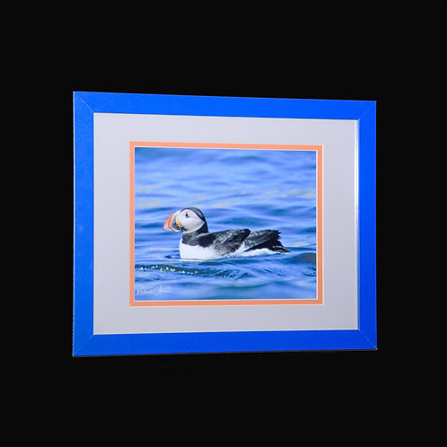 Framed Perfect Puffin 8x10 framed print