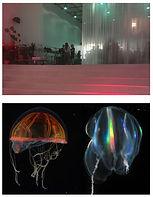 translucence | bioluminescence