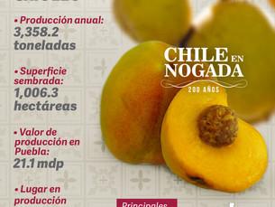 En Puebla, celebramos 200 años del chile en nogada