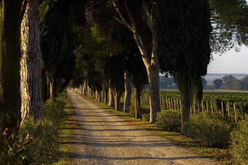 Tuscany (14).jpg