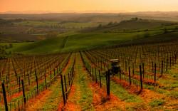 Chianti Wine Full Day Tour
