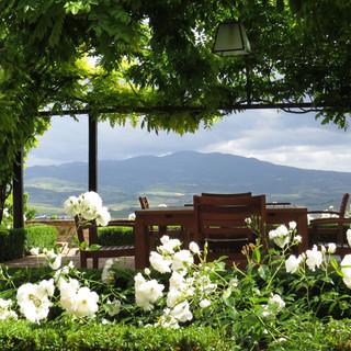 Tuscan Vineyard (8).jpg