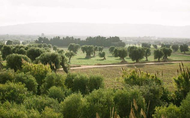 Borgo Pugliese (7).jpg