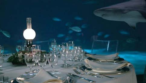 Marry in an aquarium (1).jpg