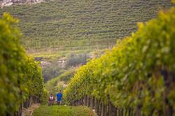 Wine Tasting In The Veneto