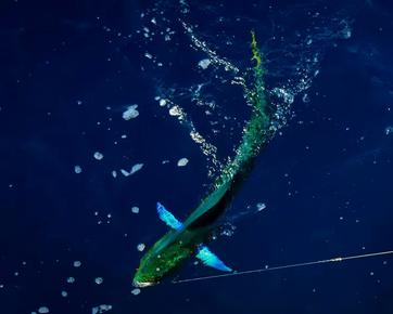 fishing in puglia4 (5).webp