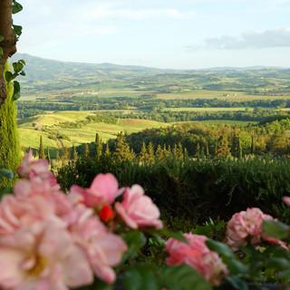 Tuscan Vineyard (12).jpg