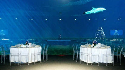 Marry in an aquarium (12).jpg