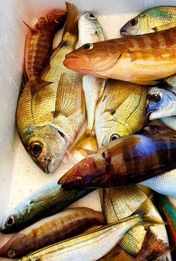Taormina Fishing Tour
