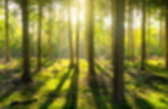 light-shining-through-the-trees-in-the-f
