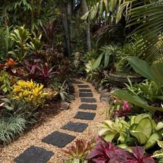 Agave furcerea & aloeWonderful-Tropical-