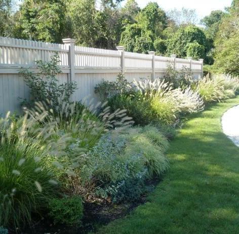 Fountain grassornamental-grass-landscape