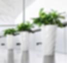 Interior Leaf Plants & Planters