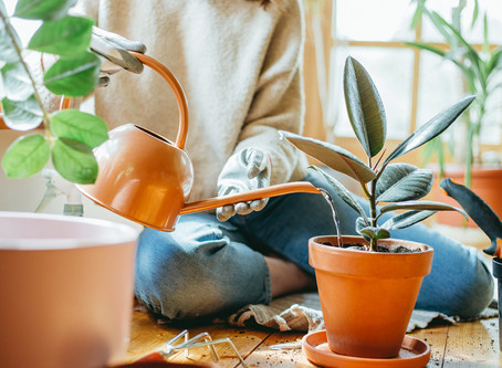 Plant care subscription - when it comes to taking care of Indoor Plants..!