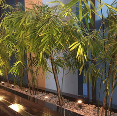 Bambooindoor-bamboo-feature-header-image