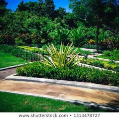 Furcraeastock-photo-sweet-tropical-garde