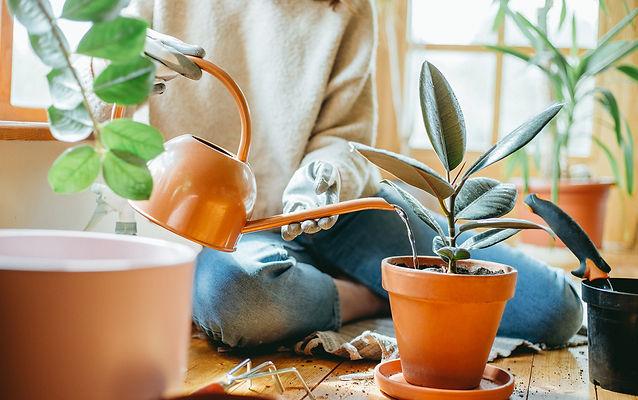 Interior Leaf plant maintenence models