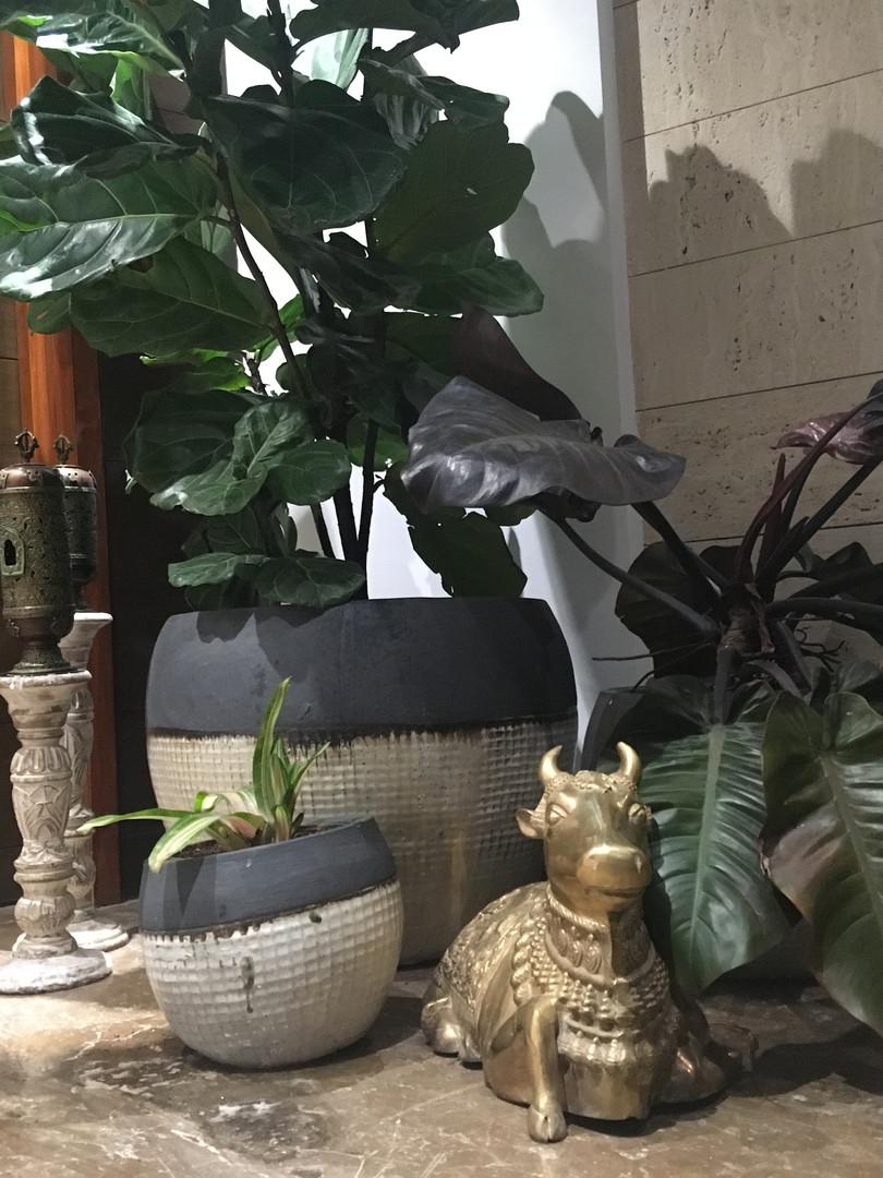 Interior Leaf Customized Planter Ideas