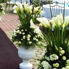 S Calla lilycalla-lily-flowers-landscapi