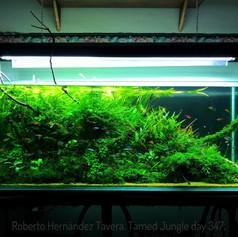 Aquatic plants6e7e713aad49325da43549e81d
