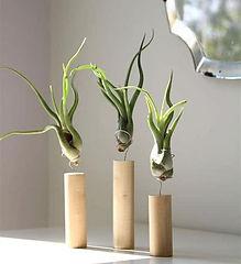 Interior Leaf plant gifting ideas