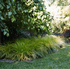 Acorusacorus-dangar-bondi-garden-austral