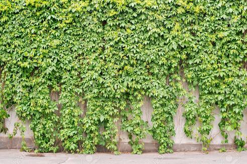 81881954-green-creeper-plant-covering-alInterior Leaf Vertical Garden Ideas