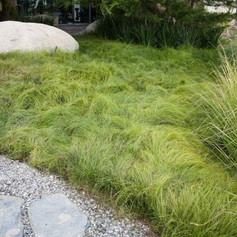 Carex74d93dbff06df5f8d9549037ad096b75.jp